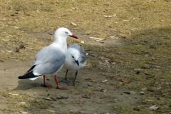 Oiseaux d'eau et de rivage
